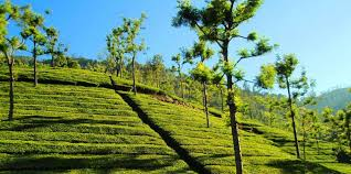Ooty Holiday Package for 3 Nights & 4 Days