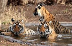 Jim corbett Package for 2 Nights / 3 Days