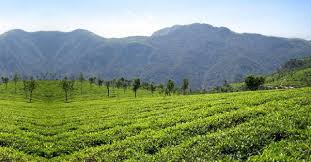 Ooty Package from Bangalore
