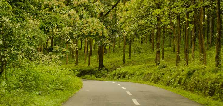 Wayanad Bus Package from Bangalore